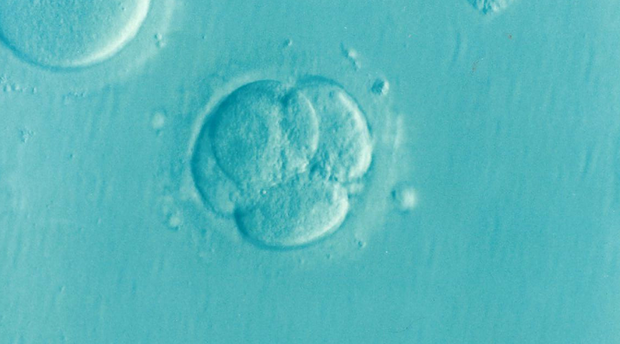How Ontario's IVF program is helping those struggling with infertility